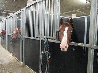 horses Henderson