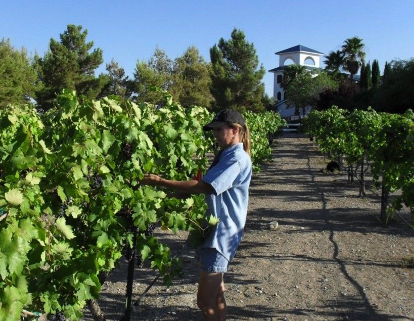 Winery and homes, houses, ranches for sale in Pahrump